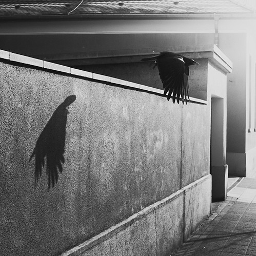 bird and shadow